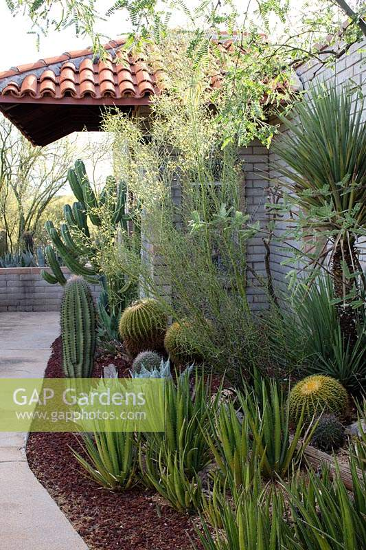 Border with aloes, agaves and cactii in a private desert garden housing a large collection of cactii and succulents many of which are rescue plants from state infrastructure projects.