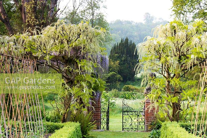 Gate leading out of the Tunnel Garden between white Wisteria floribunda 'Alba' growing on the pergola at Heale Gardens, Middle Woodford, Wilts in May
