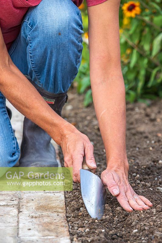 Woman using handtrowel to cover the newly sown seeds with soil