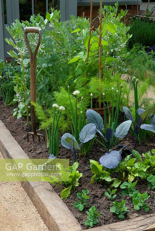 Raised vegetable bed with planting of Peas, Chard,  Violet Brussel Sprouts, Shallots, Fennel, Asparagus, Runner Beans and Broad Beans - RHS Chelsea Flower Show