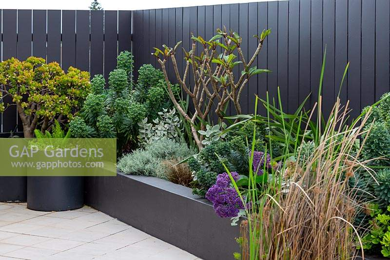 Detail of a raised garden bed with a mixed planting of grey, silver foliage plants and a small Frangipani tree that is putting on new growth featuring a Perez's Sea Lavender, with purple flowers.