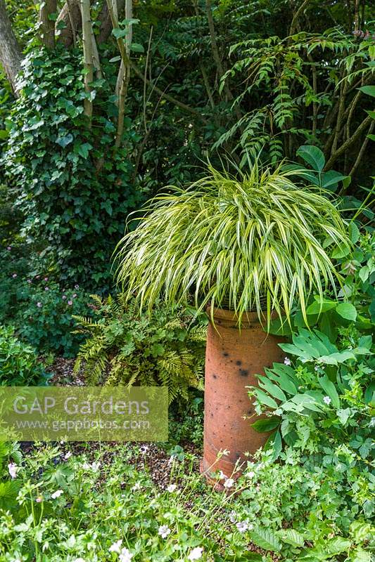 Hakonechloa macra 'Aureola' in container raised on antique chimney pot.