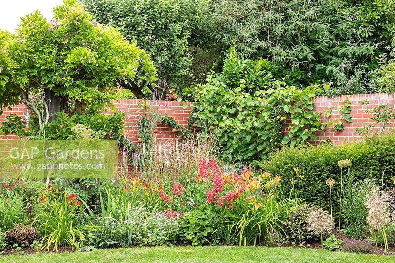 A mixed border backed by a brick wall, plants include Wisteria, Vitis vinifera - Grape Vine, Malus domestica - Apple - with perennials and shrubs in front