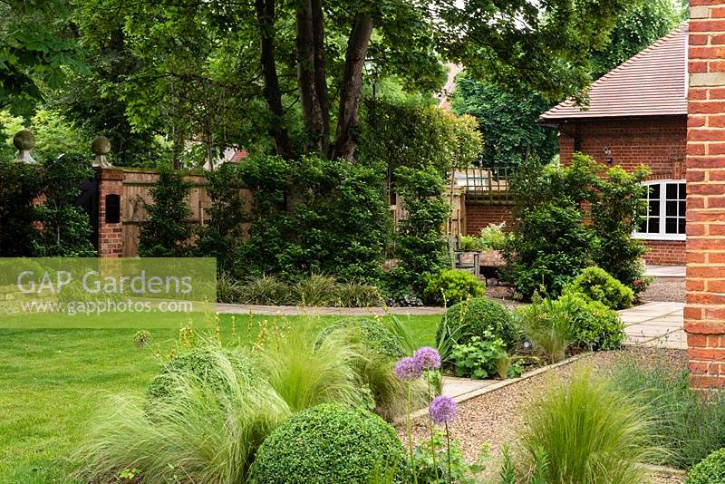 View over mixed border between gravel area and lawn, planted with Buxus - Box -balls, Stipa tenuissima, Allium and Sisyrinchium, to boundary of fences, brick walls and trees