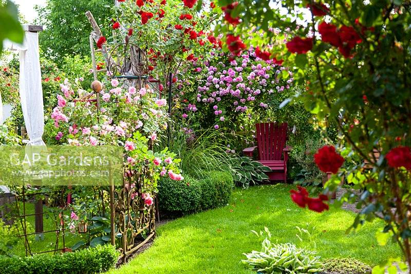 Romantic corner of garden with Rosa 'Ben Cant' and handmade red chair