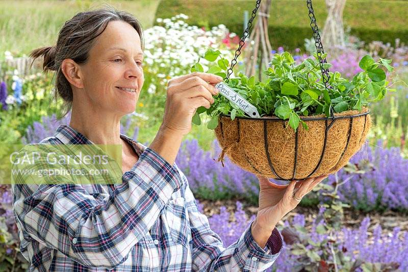 Woman inserting label into hanging basket.