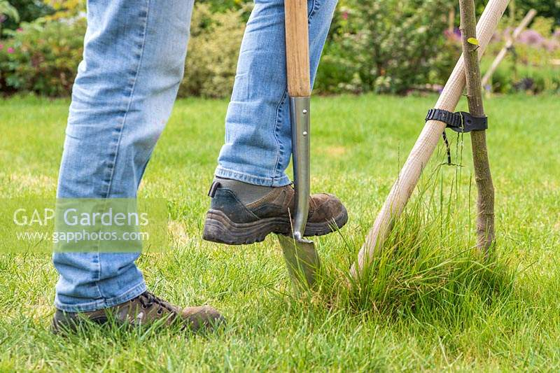 Woman using a spade to cut grass around the base of a tree