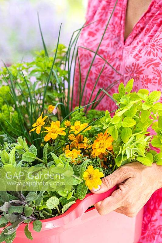 Woman holding pink plastic washing up bowl planted with herbs and flowers.