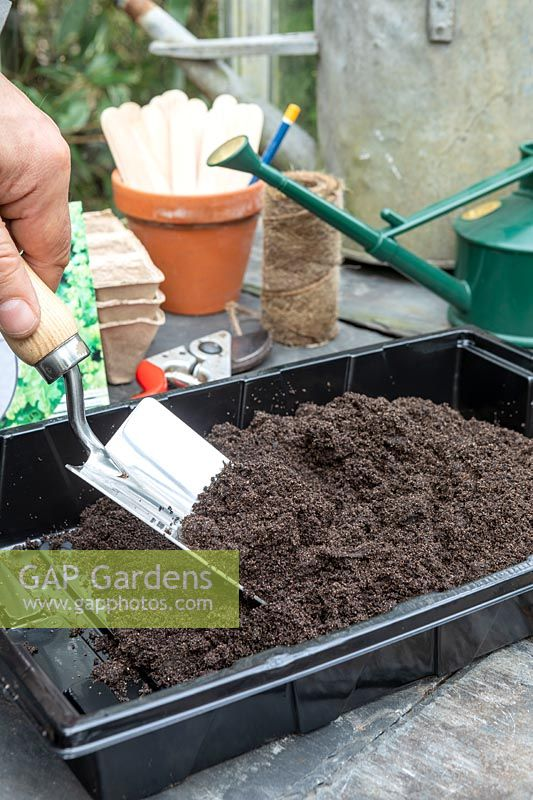 Seed sowing in the greenhouse.