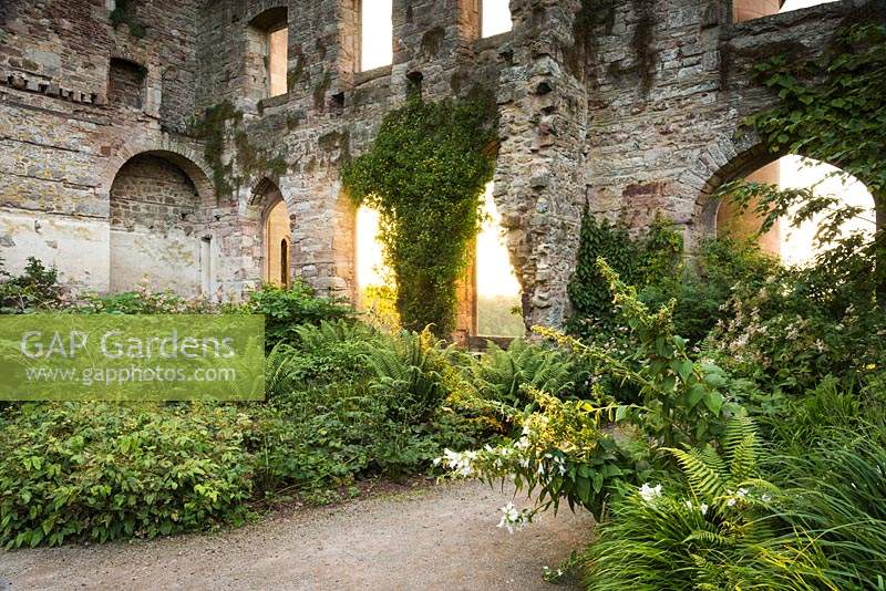 The Garden in the Ruins at Lowther Castle, planted with a range of shade loving plants including ferns, epimediums and hydrangeas.