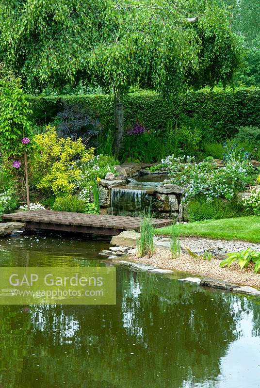 Small waterfall between garden pools with foot bridge, shrubs and marginal plants - Open Gardens Day, Bures, Suffolk