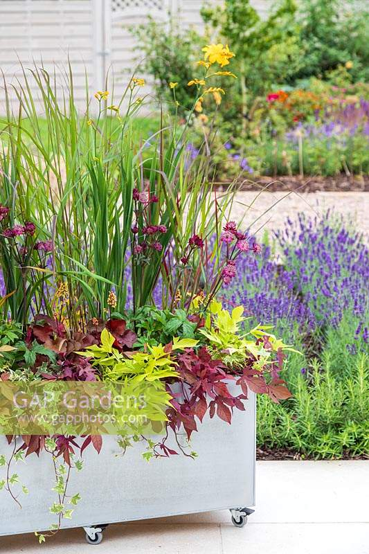 Zinc trough planter on casters on modern patio with colourful planting. Planting includes Ipomea 'Sweet Caroline - Bronze', Ipomea 'Sweet Caroline - Green', Heuchera 'Little Cutie - Blonde', Astrantia 'Sparkling Stars - Red', Crocosmia 'Warberton Yellow' and Panicum virgatum 'Warrior'.