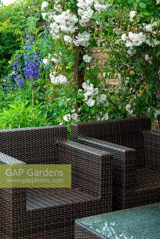 Rattan garden chairs and table beside Rambling Rose 'Adelaide d'Orleans' and border with Delphiniums beyond - Open Gardens Day, Coddenham, Suffolk