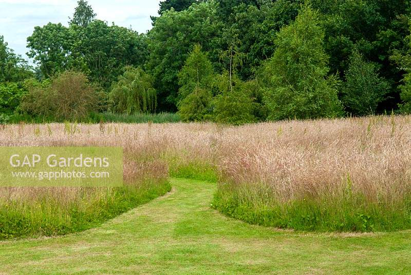 Swathes of tall grasses left for the benefit of wildlife and insects - Open Gardens Day, Kelsale, Suffolk