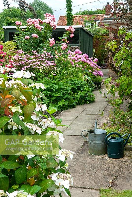 Border of Lacecap and Mophead Hydrangeas with Roses and various other plants - Open Gardens Day, Kelsale, Suffolk