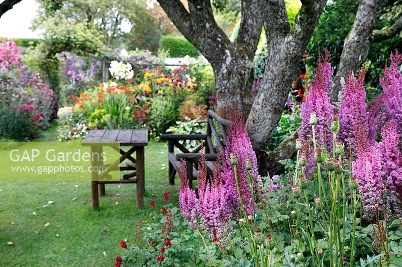 Astilbe in foreground in front of tree with rustic seating on grass, beyond colourful flower beds