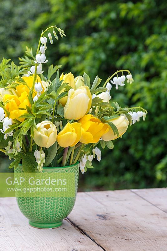 Spring floral arrangement in green glazed pot with Dicentra spectabilis 'Alba' and mixed yellow Tulips