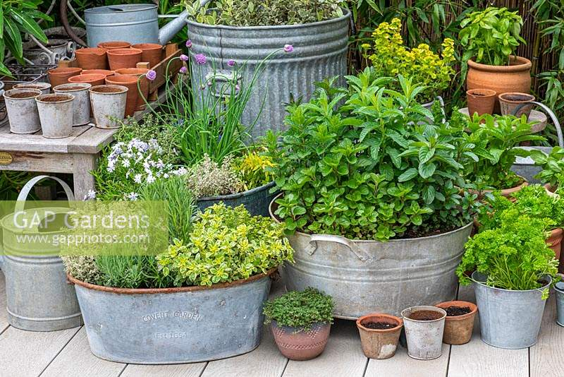 Herb garden in the corner of a small deck with an oval planter of Oregano 'Country Cream', English lavender, central Rosemary, and 'Silver Queen' Thyme. Old washtub planted with 5 varieties of mint.
