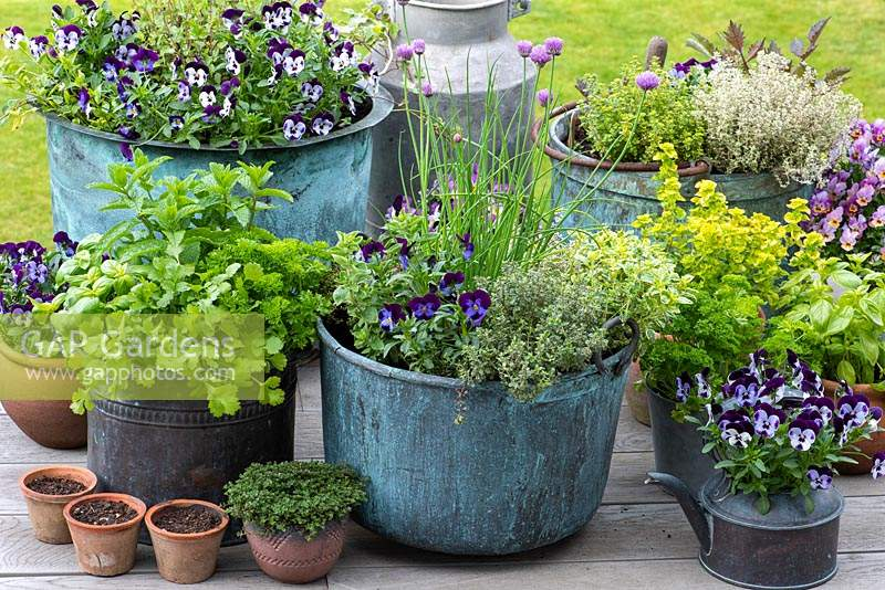 Spring container display - Central copper pot planted with chives, thyme, oregano and violas in May.