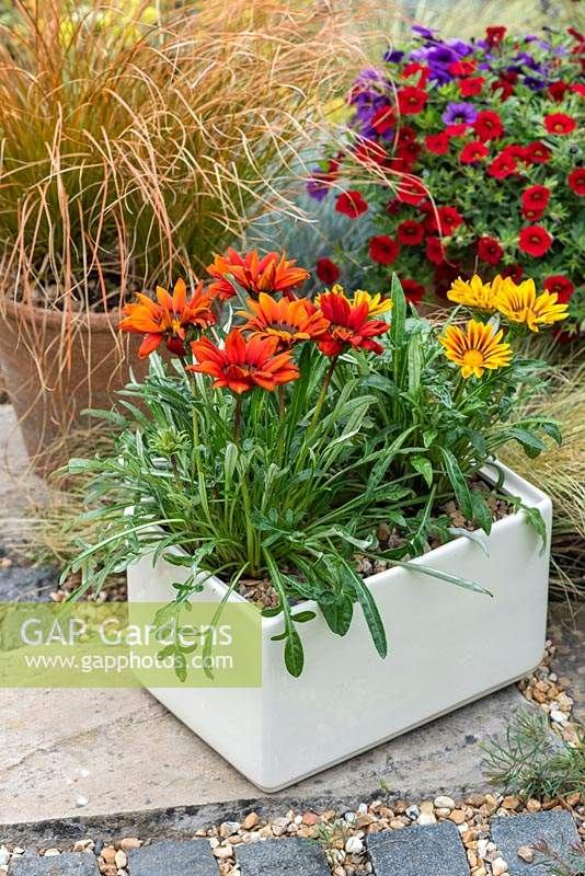 A ceramic bread bin planted with Gazania 'New Day Mixed'