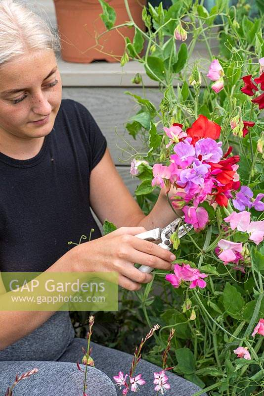 A woman cutting sweet peas