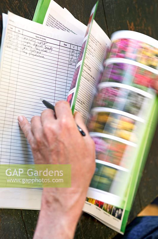 Choosing spring bulbs from a mail order catalogue