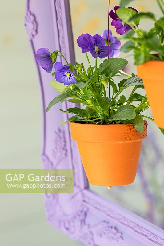 Corner of painted picture frame with purple viola in suspended pot
