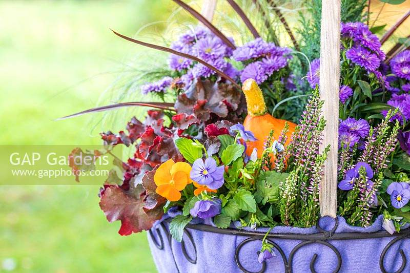 Purple themed Autumnal hanging basket