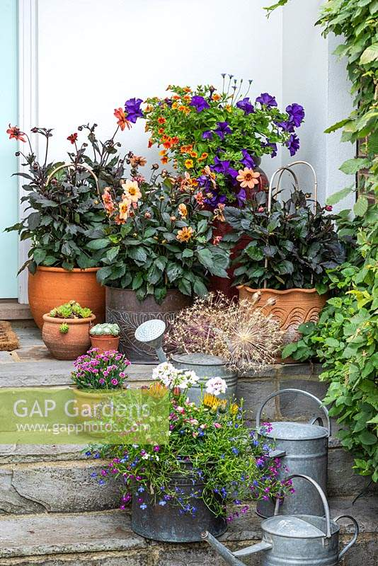 Pots of dahlias and bedding plants decorate stone steps by front door.
