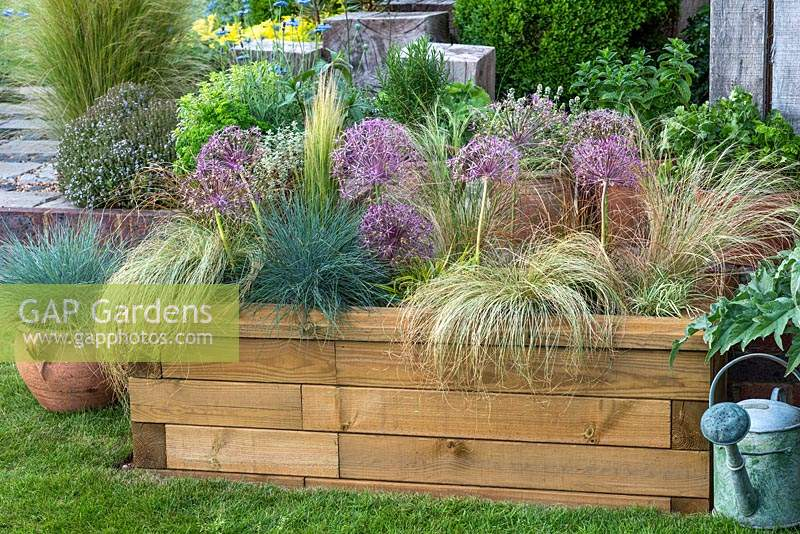 Timber raised bed planted with Allium cristophii between ornamental grasses. Spilling over the edges is Carex comans 'Frosted Curls'. Red grass Carex testacea 'Prairie Fire', Festuca glauca 'Intense Blue' and feathery Stipa tenuissima.