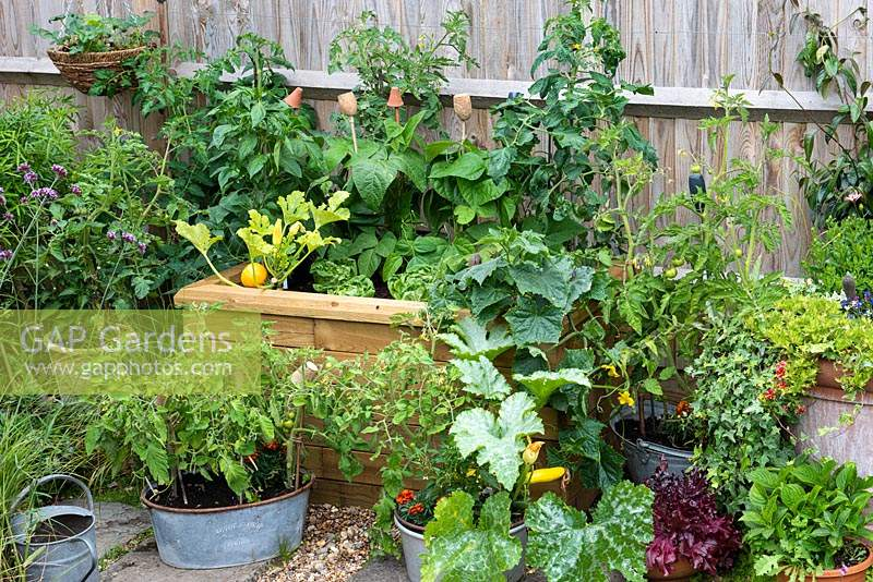 A raised wooden bed planted with vegetables including Courgette 'One Ball', trailing squash.