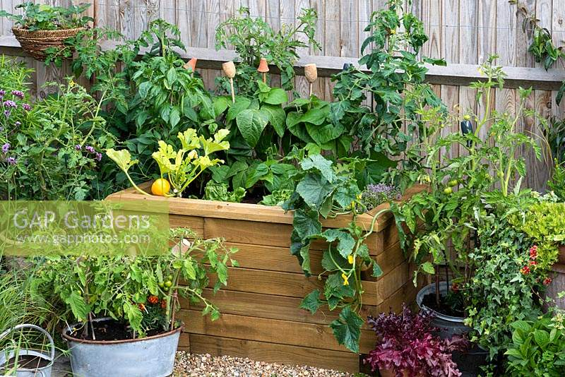 A raised wooden bed planted with vegetables including Courgette 'One Ball' and trailing cucumber