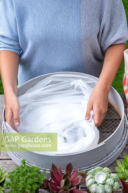 Woman lining garden sieve with plastic bin liner - double layer. Planting Succulent Sieve.  Step 2.