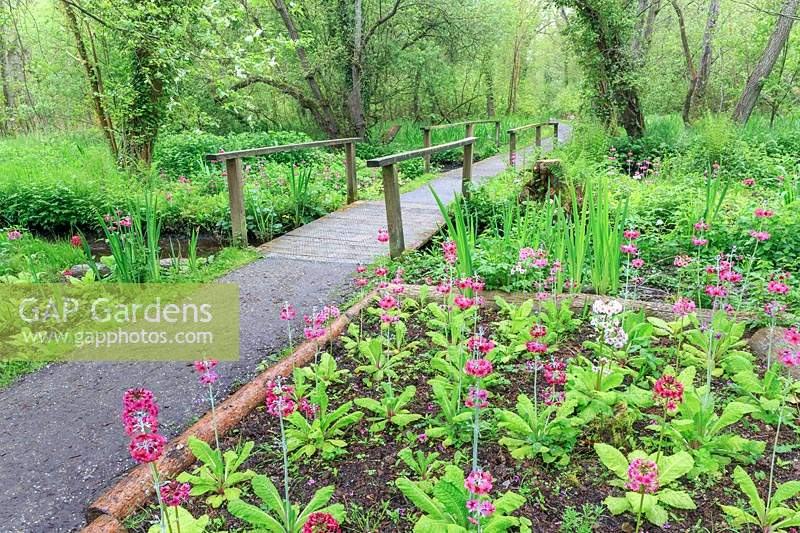 Pathway across the dykes with candelabra primulas