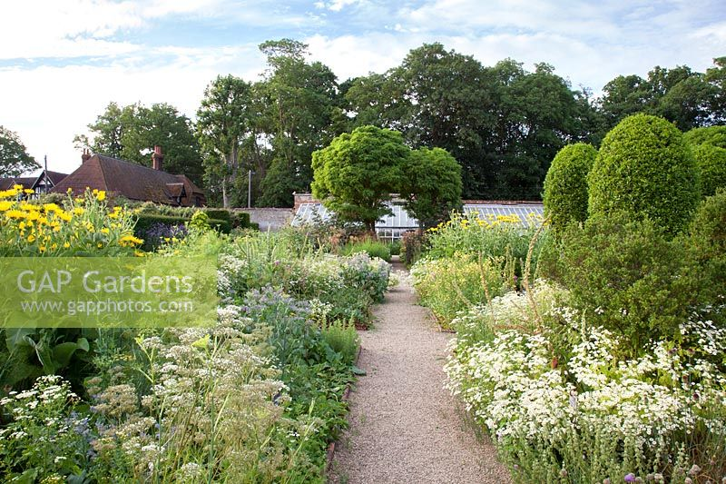 Formal pathway through Herb Garden with feverfew, fennel, borage, inula and clipped topiary with greenhouse beyond. Loseley Park, Surrey