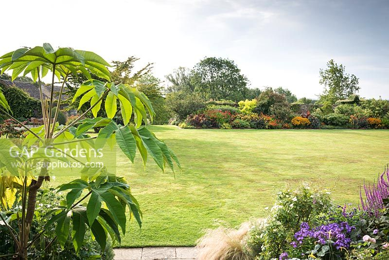 View across the main lawn towards colour-themed borders, in the foreground large-leaved Tetrapanax papyrifer 'Rex'