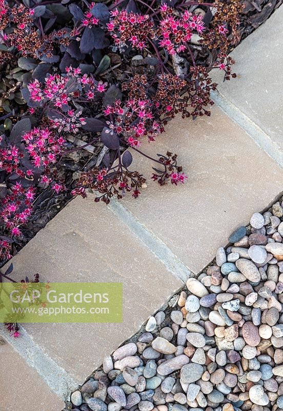 Path edge made from square pavers with Sedum growing along side
