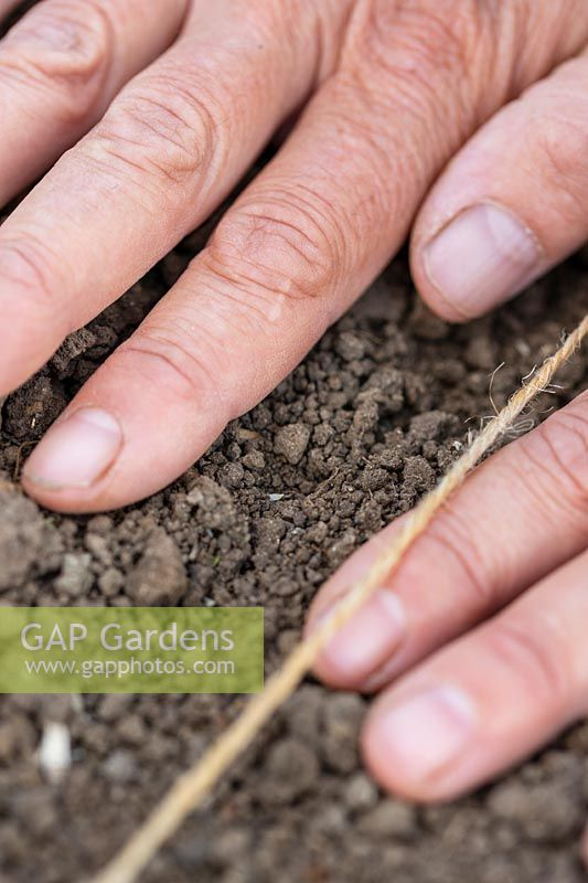 Using hands to firm soil over newly-sown seeds