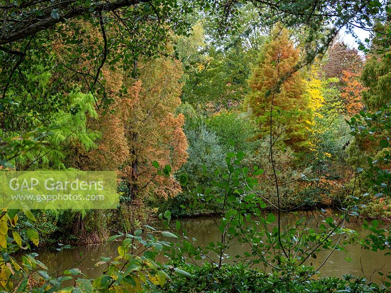 Every shade of green looking across the lake at Bodenham Arboreatum, Worcestershire, UK.