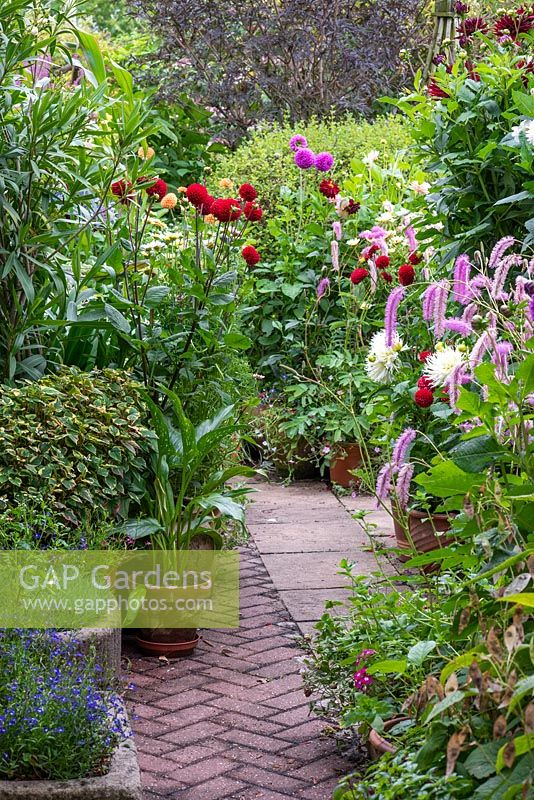 Pots of dahlias and Sanguisorba on terrace with herringbone pattern brick path.
