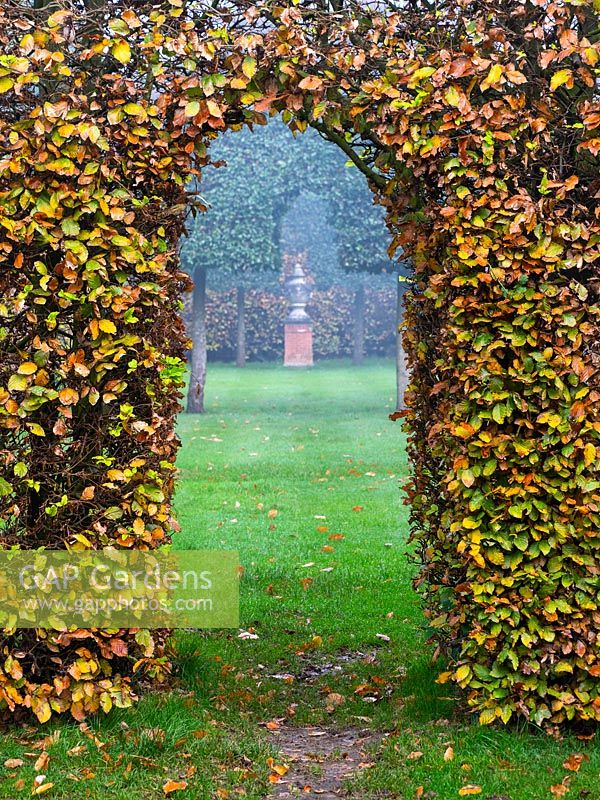 Carpinus - Hornbeam - hedge with arch, view through to focal point