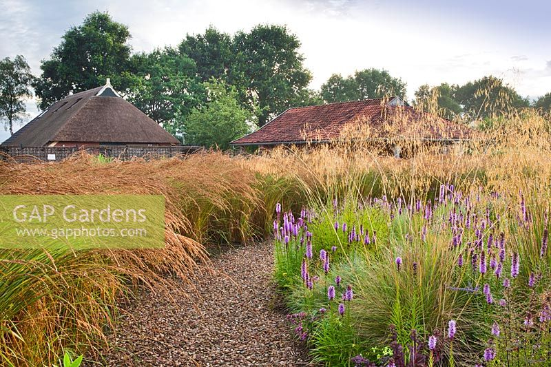 Prairie planting with a gravel path through Liatris spicata, Stipa gigantea, Calamagrostis x acutiflora 'Karl Foerster', Molinia and Sedum