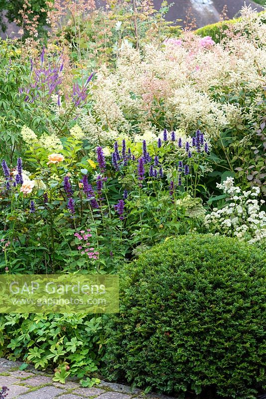 A Taxus - Yew - dome in front of a bed of mixed flower bed. Planting includes: Astrantia, Agastache 'Blackadder', Rosa 'The Lark Ascending' - English Shrub Rose, Hydrangea, Veronicastrum and a froth of Persicaria polymorpha, Bistort and Macleaya