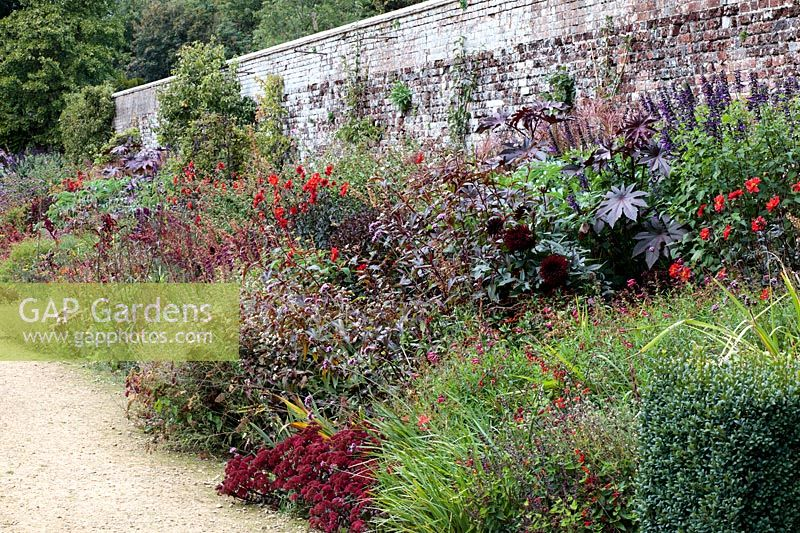 Autumn border with Sedums, Dahlias, and Salvias