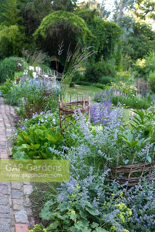View from the top of the garden at Mill House where the narrow path paved with bricks is bordered with Nepeta 'Six Hills Giant', Alchemilla mollis, Bergenia cordifolia, Salvia verticillata 'Purple Rain', Geranium 'Rozanne', plant supports have been created using willow wands pollarded from the garden.