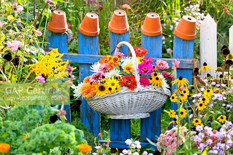 Trug basket hanging on a blue wooden fence with summer flowers sunflower, zinnia, dahlia and rudbeckia.