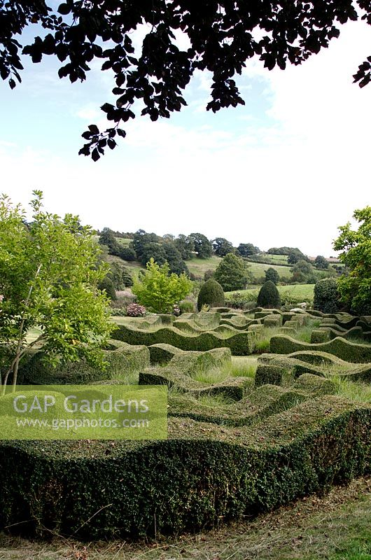 Topiary waves interspersed with grasses at Grendon Court, Herefordshire, UK.
