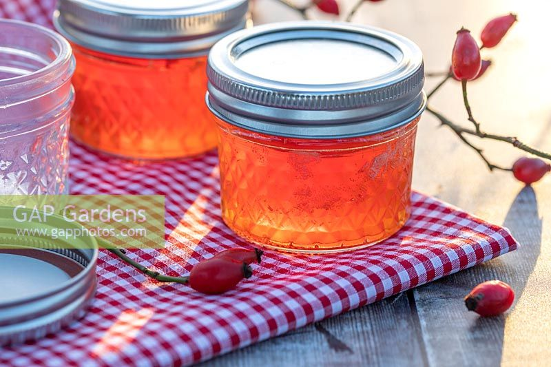 Rosehip Jelly in glass jars on table top with gingham table cloth and rose hips.