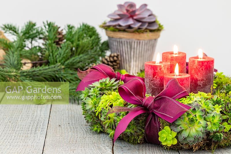 Succulent advent wreath with Sempervivum Bronco, Crassula, red pillar candles and red ribbons on rustic table top.