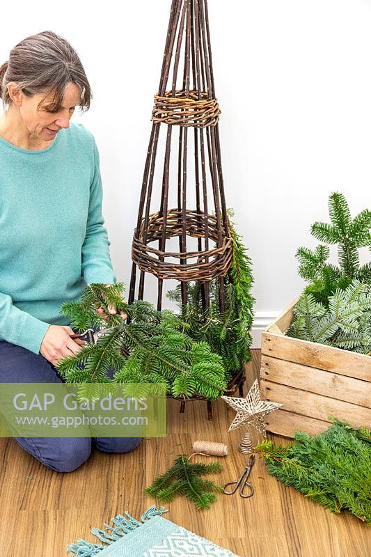 Woman using garden secateurs to cut pine - abies foliage off larger stems